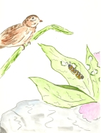 Sparrow illustration from Amazing Matilda - A Monarch's Tale - Children's Book Review on Mungai and the Goa Constrictor