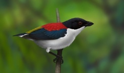 Cebu flowerpecker