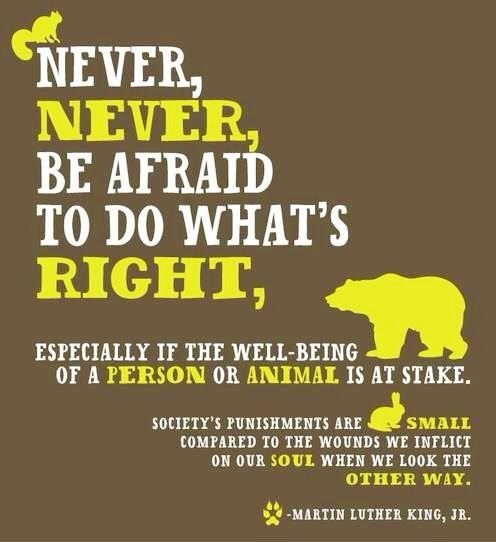 Never be afraid to do what's right