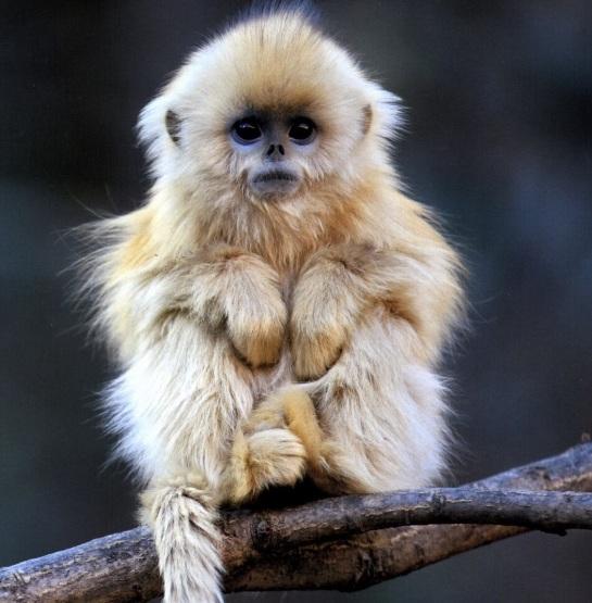 Baby Yunnan