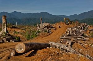 Deforestationin Sumatra
