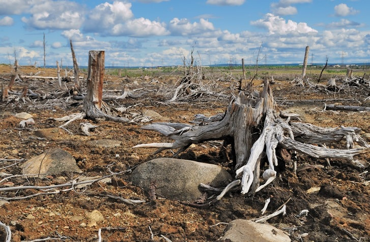 Up to 90 per cent Of Global Deforestation is Due to Organized Crime