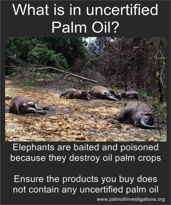 What Is Uncertified Palm Oil?
