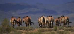 herd going down the steppe