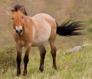 Horse showing colours