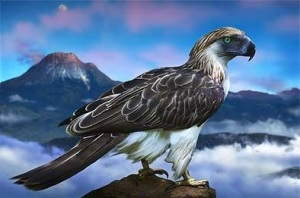 Philippine eagle, Mount Apo, Mindanao by Andre Hoffmann