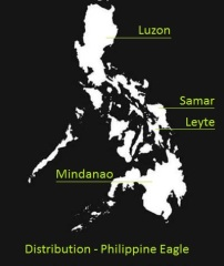 Current distribution of Philippine eagles