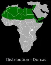 Dorcas gazelle distribution