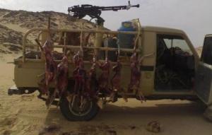 Hunting Dorcas gazelle in Libya