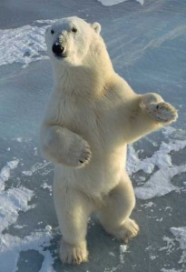 Polar bear standing on the ice